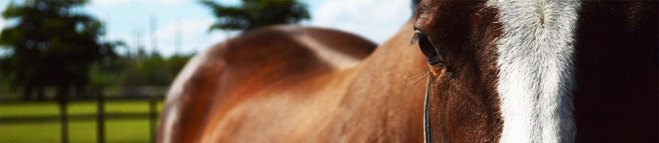 horse-eyes.jpg
